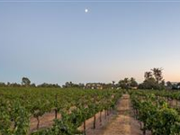 PRIVATE EASTSIDE VINEYARD COMPOUND